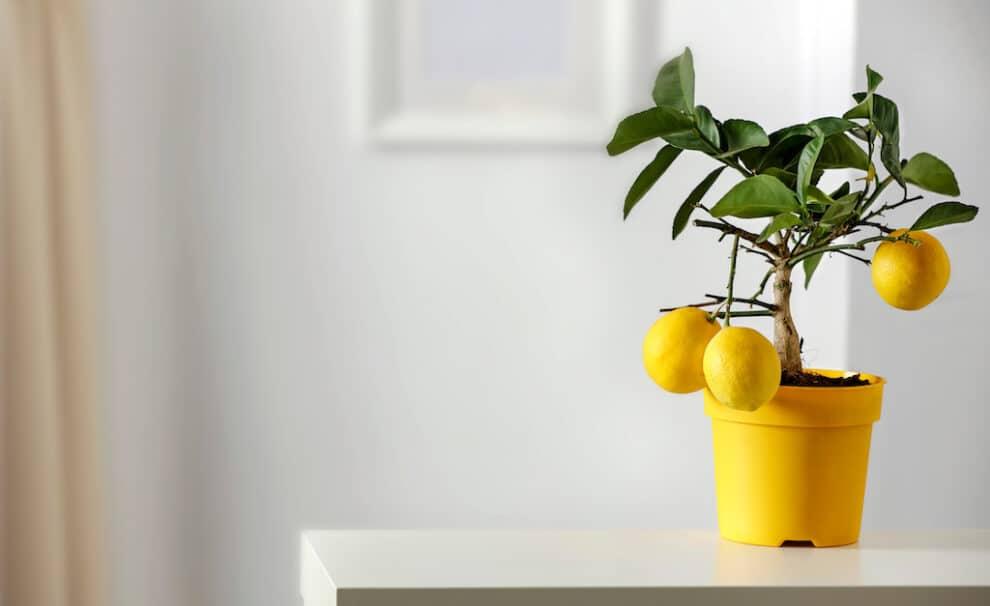 arboles frutales casa