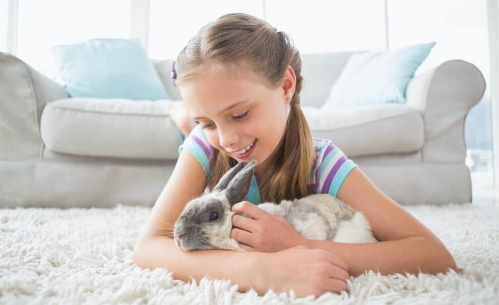conejo de mascota
